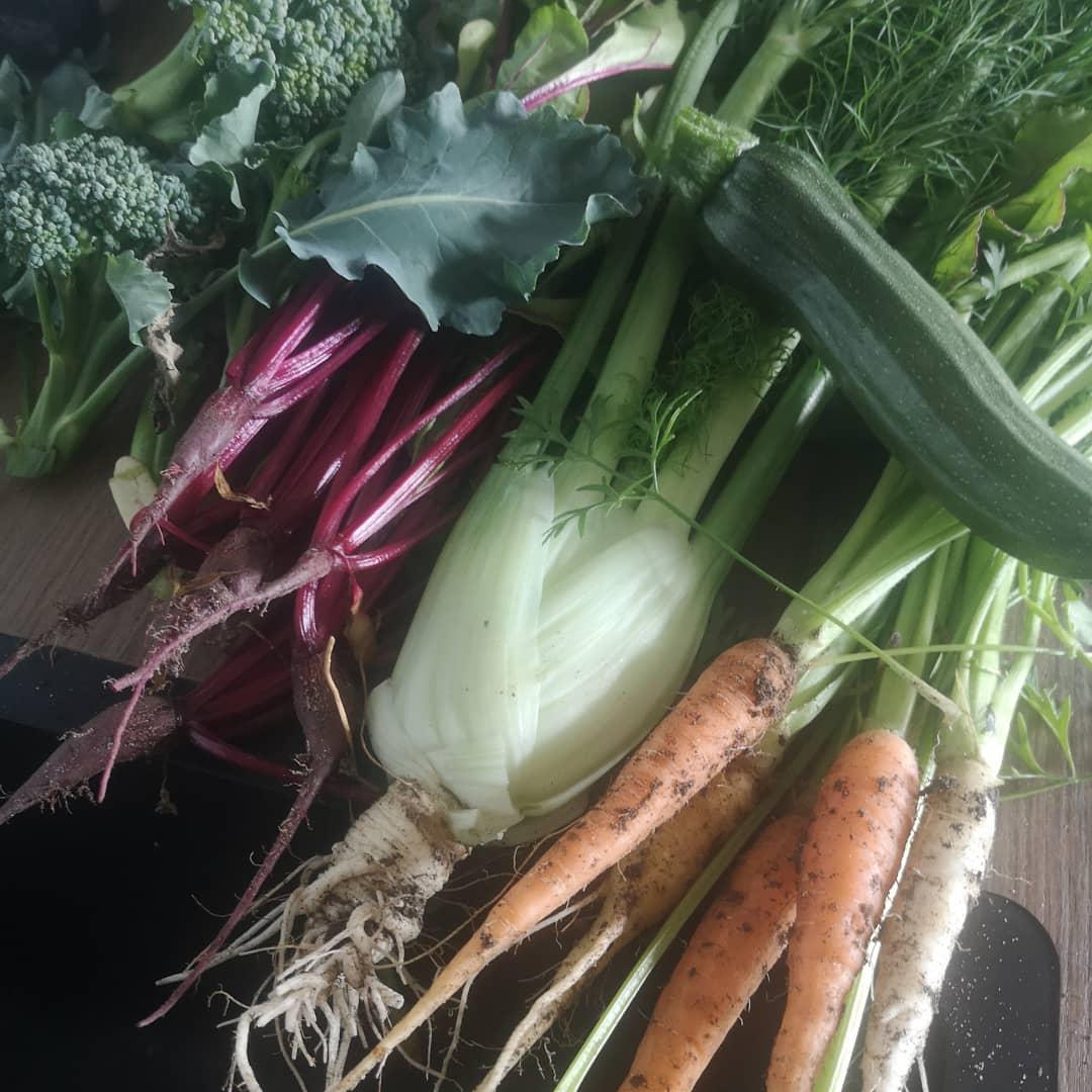 Sommer i køkkenhave... en dejlig tid 😎 #køkkenhave #friskoggrønt #vegetarretpåmenuen #bonderøvsliv #køkkenhaveguf